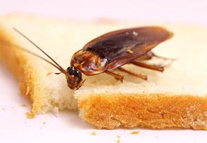 Отзывы о борьбе с тараканами
