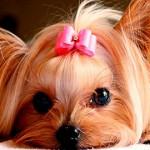 Выбираем имена для собак девочек