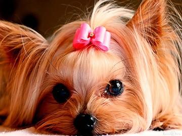 имена для собак девочек