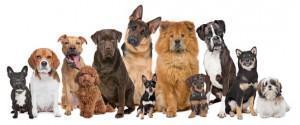 Красивые имена для собак мальчиков