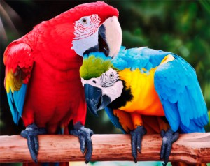 Выбираем красивое имя для попугая мальчика