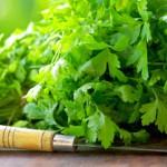 Полезные свойства кинзы — одно растение от всех болезней
