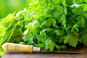 кинза- полезные свойства растения и профилактика болезней