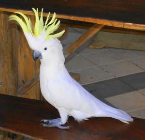 Выбираем прикольное имя для попугая мальчика
