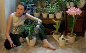Размножение спатифиллума дома