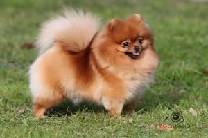 Клички для собак маленьких пород