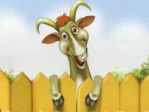 Год козы для козы женщины