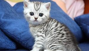 Прикольное имя для кота британца мальчика