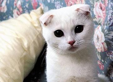 Имена для сера белых котов