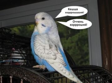 Можно ли беременным заводить попугая