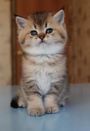 Русские имена для котов красивые