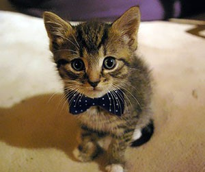 Имена для кота простые