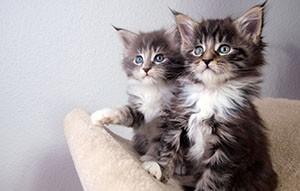 Рекомендации к выбору имени котёнка мальчика