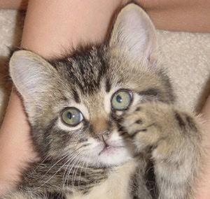 Какие название котов бывают