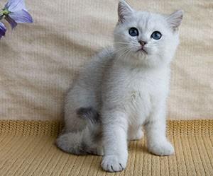Советы и рекомендации по выбору клички для кошек девочек