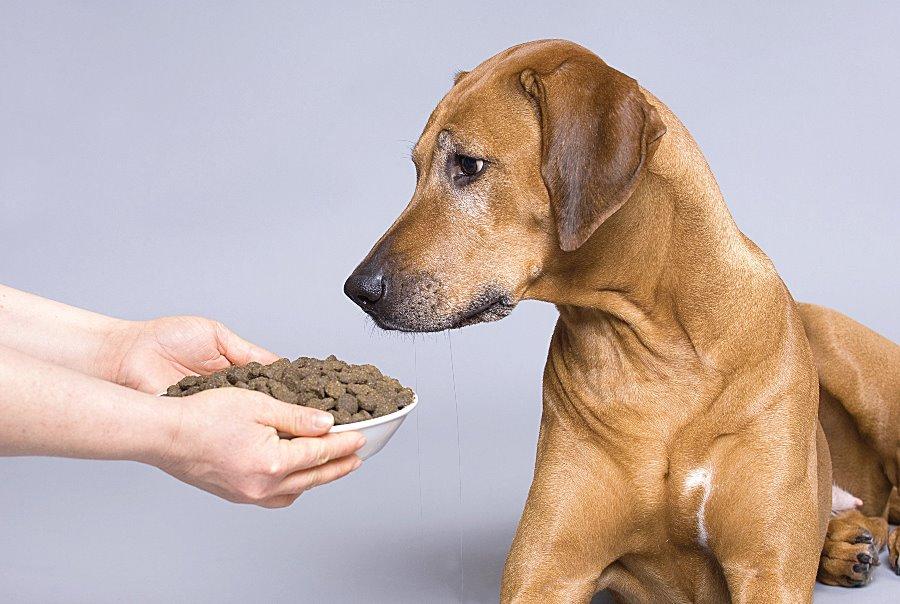 Как выбрать сухой корм для собаки