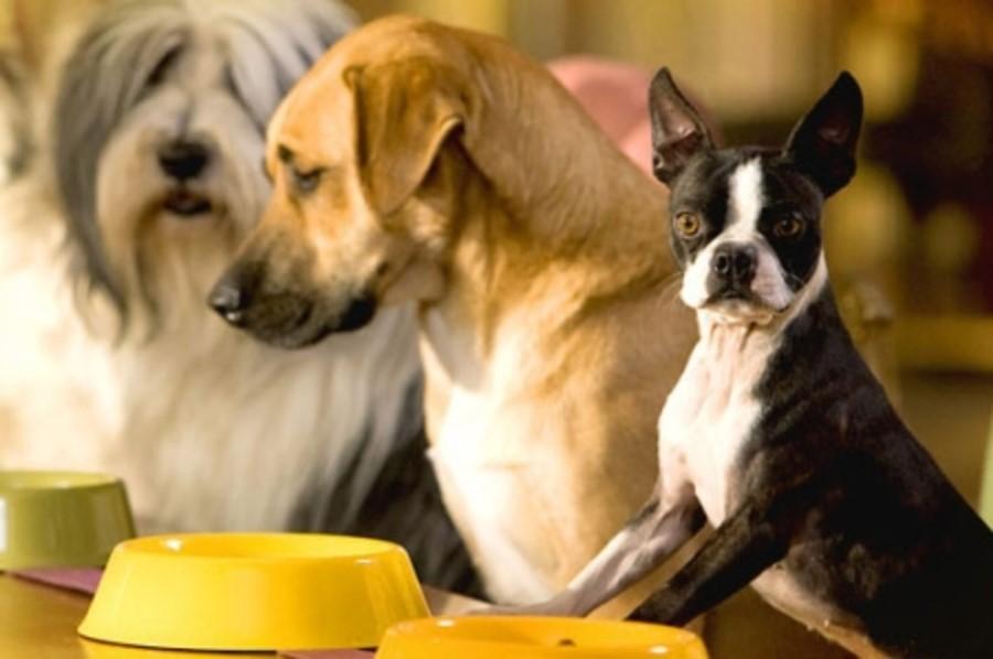 Какой сухой корм для собак выбрать