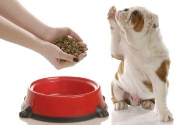Правильно выбрать сухой корм для собак