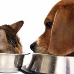 Рейтинги кормов: достоинства и недостатки