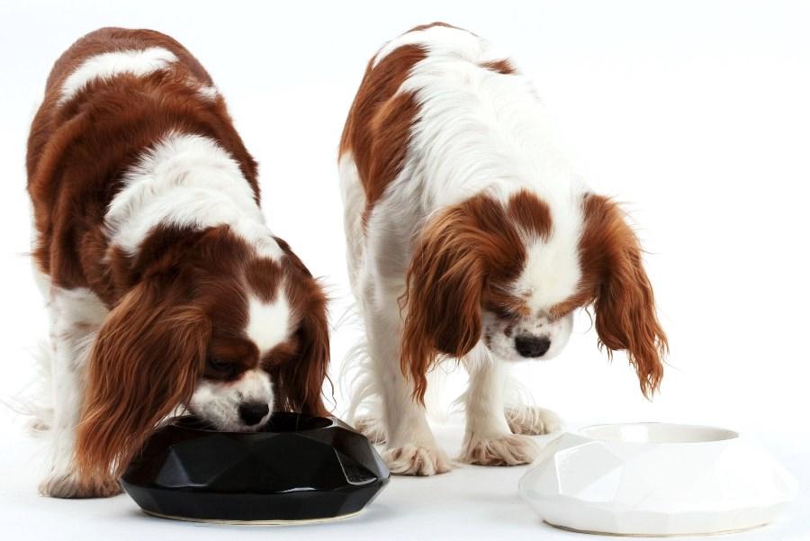 Сравнение сухих кормов для собак по составу