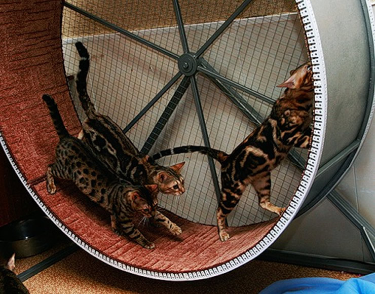 Беговое колесо для кошек