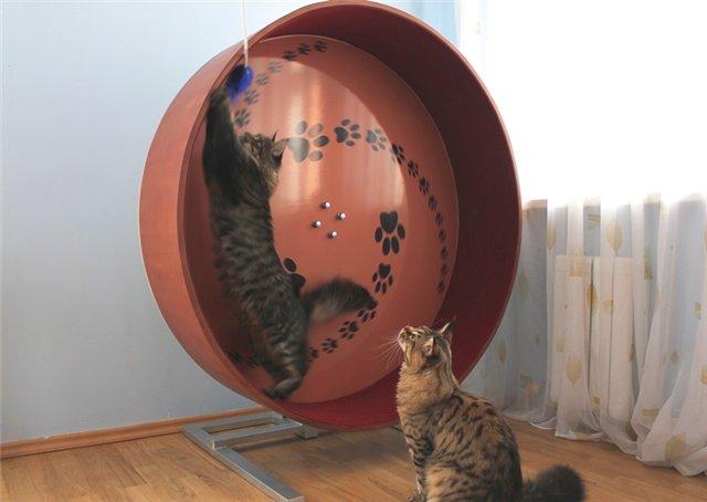 Беговое колесо для котов своими руками