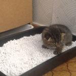 Туалет для кошки – выбираем правильный вариант