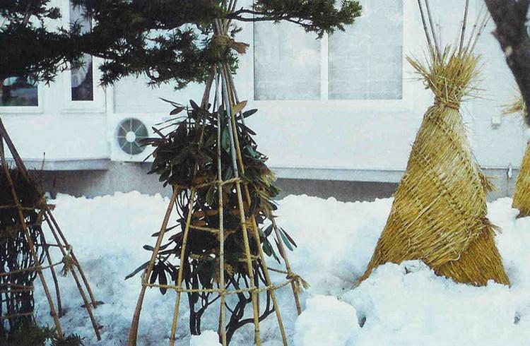 Декоративный кустарник миндаль - зимовка
