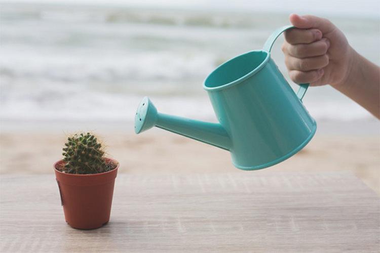 Как поливать разные виды кактусов