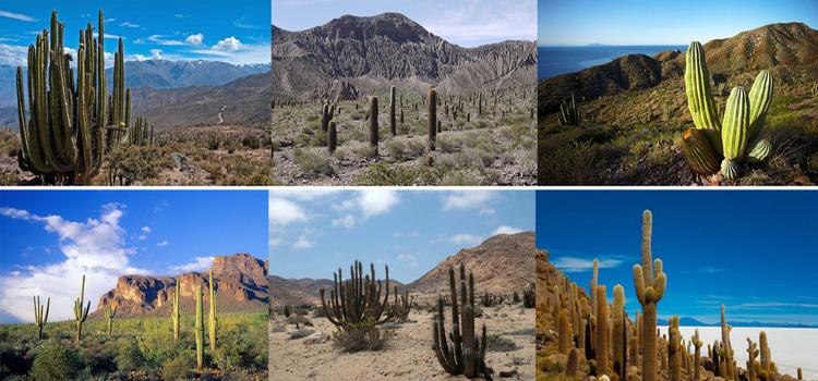 Лучшая среда обитания для разных видов кактусов