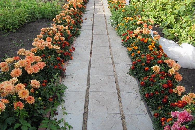 Бордюрные цветы для дачи, цветущие все лето, с фото и названием