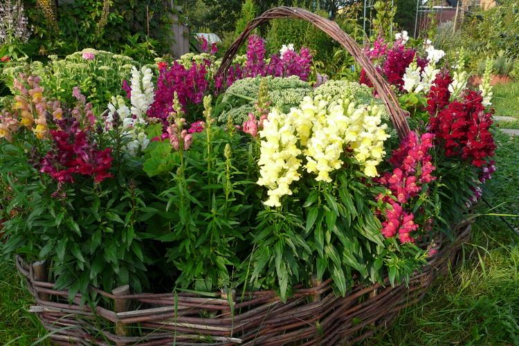 Цветы для дачи, цветущие все лето, с фото и названием