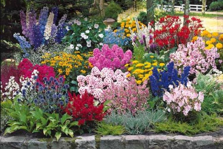 Цветы для дачи, цветущие все лето