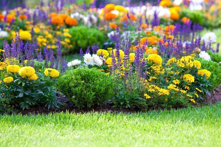 Клумба садовых цветов для дачи, цветущих все лето