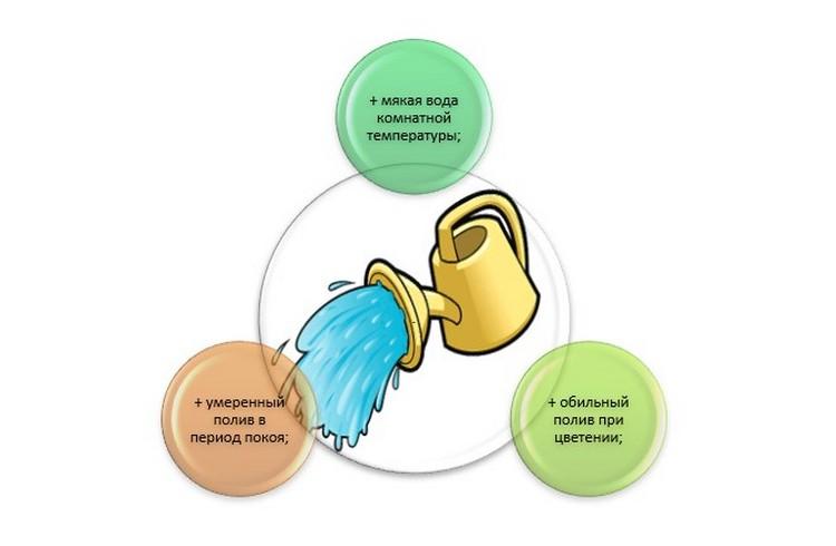 Рипсалидопсис уход в домашних условиях полив