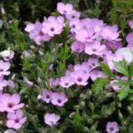 Садовые цветы для дачи, цветущие всё лето с фото и названием – что выбрать, как садить и ухаживать