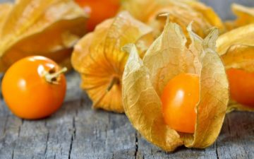 Физалис десертный: выращивание и уход, фото