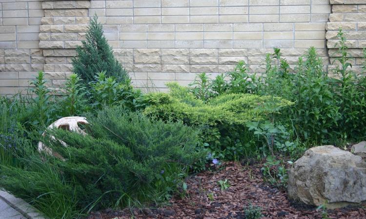 Дерево тис: фото и описание, посадка