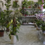 Вредители комнатных растений и цветов, методы борьбы с ними