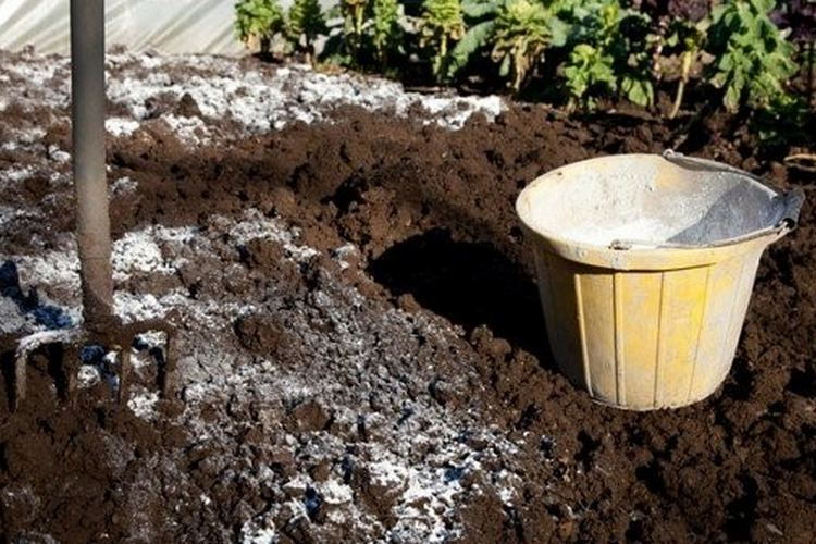Борьба с проволочником на картофельном поле осенью