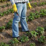 Чем обработать клубнику осенью от болезней и вредителей