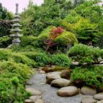 Хвойники в ландшафтном дизайне: правила составления композиций, варианты