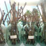Основные способы выбора, подготовки и хранения до весны срезанных осенью виноградных черенков
