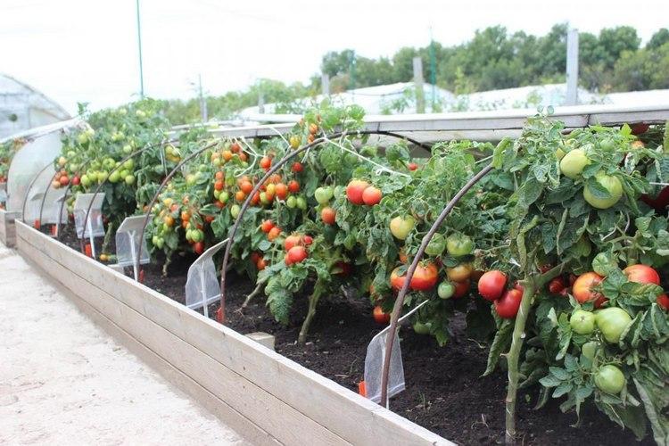 Как подготовить грядки осенью для томатов
