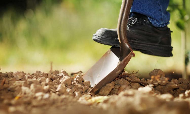 Как подготовить грядки осенью под посадку