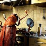 Как навсегда избавиться от тараканов народными и промышленными способами