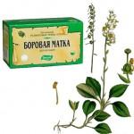 Боровая матка - применение травы, лечение женских болезней