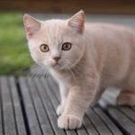 Красивые и прикольные имена для кошек-девочек