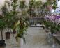 Вредители комнатных растений и меры борьбы с ними, фото