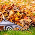 Нужно ли убирать листву в саду осенью